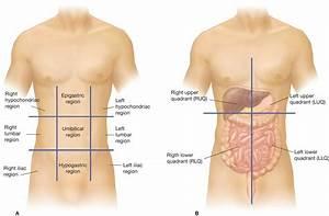 A  The Nine Regions Of The Abdominopelvic Cavity   B  The