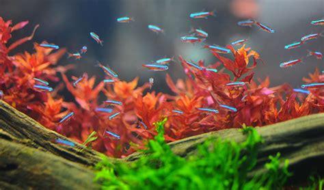 chaise de bureau sans accoudoir reproduction des neons en aquarium 28 images