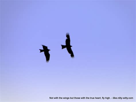 Fly High Quotes. Quotesgram