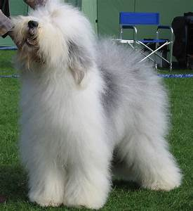 Animal En G : old english sheepdog wikipedia ~ Melissatoandfro.com Idées de Décoration