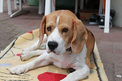 tierheime neue besitzer erzaehlen ehemalige tierheimhunde