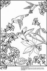Coloring Pages Hummingbird Printable Bird Flowers Hummingbirds Humming Birds Flower Adult Sheets Colouring Adults Print Realistic Books Wings Really Colorings sketch template