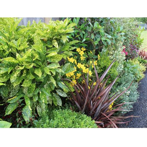 evergreen shrubs for borders evergreen low maintenance border
