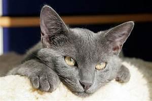 Katzenalter Berechnen : katzenjahre in menschenjahre wie alt ist meine katze ~ Themetempest.com Abrechnung