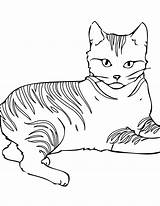 Coloring Cat Pages Warrior sketch template