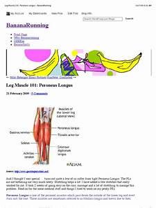 Leg Muscle 101  Peroneus Longus  U00ab Bananarunning