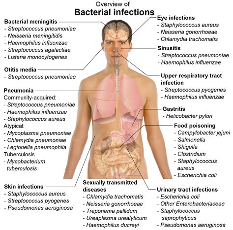 Fungal Infections A Potential Problem For The Entire Body