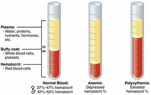 Blood tests & lab analysis: How it works and what you need ...