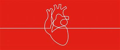 Heart Health Healthy Human Animation Easy Pumping