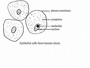 Bio Lab Midterm
