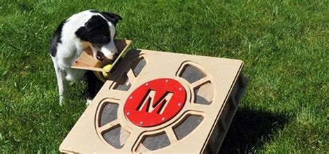 how to dogs keep your dog entertained all day long with the fetch o matic ball launcher 171 macgyverisms