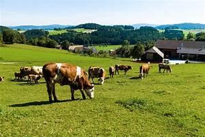 Omega 3 Fettsäuren Lebensmittel : bio produkte enthalten mehr omega 3 fetts uren im vergleich mit fleisch und milch aus ~ Frokenaadalensverden.com Haus und Dekorationen