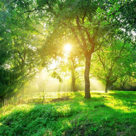Green Forest Background Morning Sunrise Spring Season ...