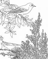 Coloring Bluebird Pages Mountain Nevada Flower Bird Printable State Sheets Eastern Mountains Yellow Sagebrush Finch Sierra Printables Animals Birds Purplekittyyarns sketch template