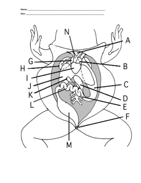 Frog Dissection Worksheet 2