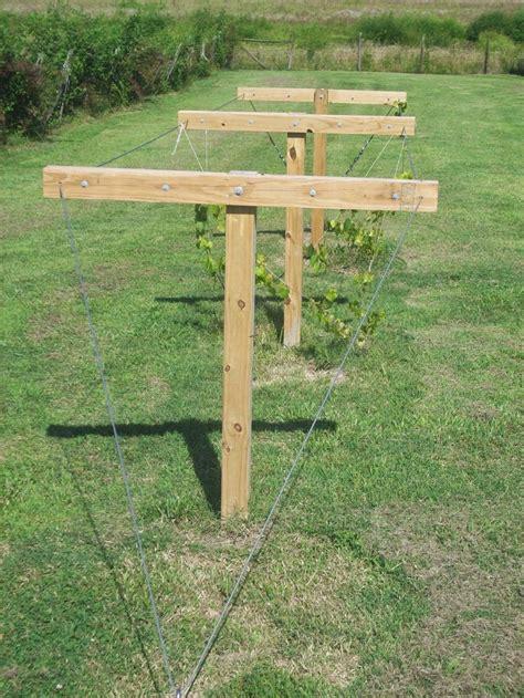 how to build a muscadine trellis muscadine trellis home gardening pinterest trellis