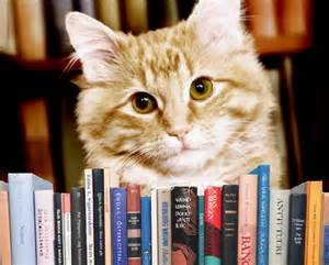 dewey the library cat the world s most library cat