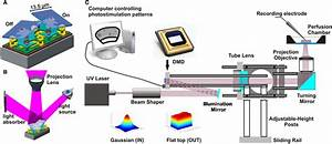 Principal Of Digital Micromirror Device  Dmd  Function And