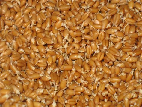 wheat berries philosophizing with a hammer simple ways to use whole wheat berries