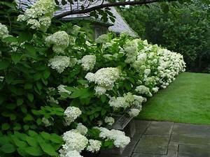 Arbuste À Feuillage Persistant : haie fleurie et persistante quels arbustes pour haies ~ Melissatoandfro.com Idées de Décoration