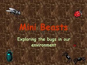 Exploring The Bugs In Our Environment