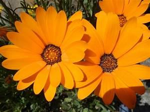 Thormahlen blog: orange flowers