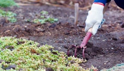 Savs piemājas dārziņš - ko ņemt vērā, veidojot pirmās ...