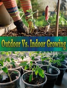Indoor Grow Anleitung : outdoor vs indoor growing quiet corner ~ Eleganceandgraceweddings.com Haus und Dekorationen
