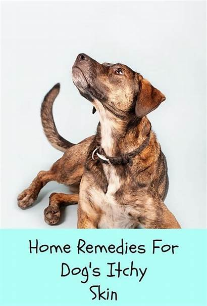 Dog Remedies Relief Itch Dogs Essential Oils