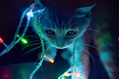 Anime Kitten Wallpaper - anime cat animals lights lights wallpapers