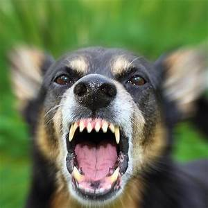 what to do if a rabid dog bites someone 1239