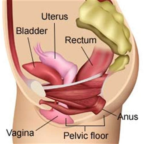 pelvic floor spasms after hysterectomy where are pelvic floor muscles how to feel pelvic floor
