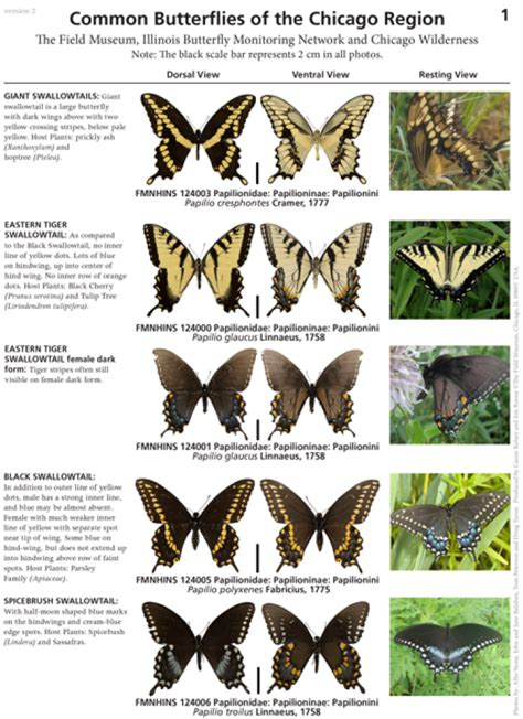 Illinois -- Common Butterflies of the Chicago Region ...