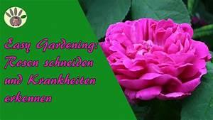 Rosen Schneiden Zeitpunkt : rosen richtig schneiden und krankheiten erkennen youtube ~ Frokenaadalensverden.com Haus und Dekorationen