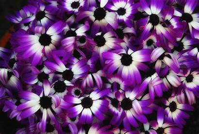 Purple Flowers Wallpapers A22 Desktop Violet 4k