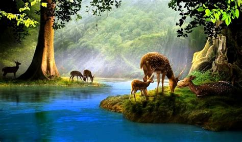 Nature Animals Forest  Amazing Wallpapers
