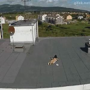 Spy GIF - Find & Share on GIPHY