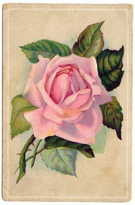vintage image  lovely pink rose card