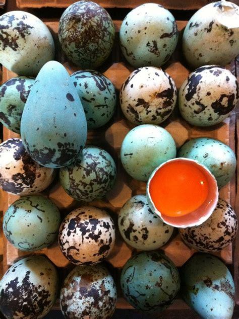 102 best bird ocean puffin images on pinterest