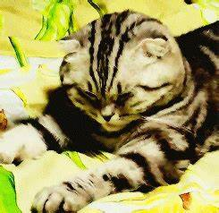 Cat A Party Secret Life Of Pet GIFs - Find & Share on GIPHY