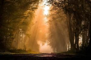 Road, Forest, Plants, Sun, Rays, Mist, Nature, Trees, Hd, Wallpapers, Desktop, And, Mobile, Images