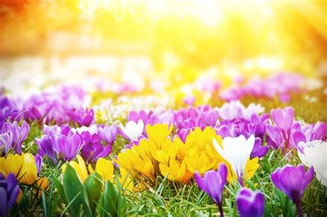 embrace spring fever  heat  sales carew