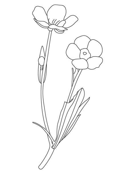 printable buttercup coloring pages coloring home