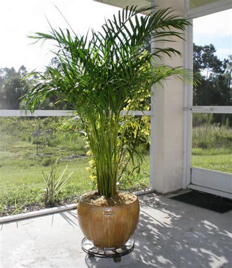best indoor trees tropical house plants for your garden room interior design inspiration
