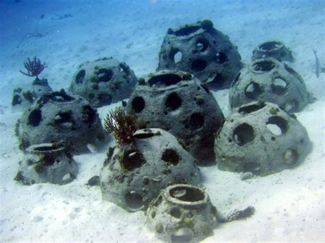 Eternal Reefs Can Turn Your Remains Into A Sustainable