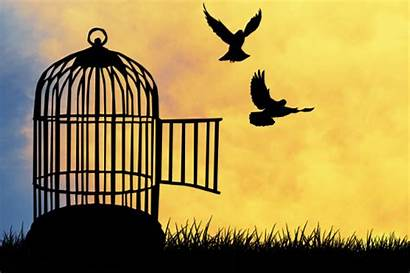 Escape Released Word Hear Never Freedom Cage