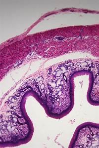 Photomicroscopy New Slides On Eecue Com   Dave Bullock    Eecue