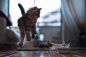 Wallpaper Crazy Cats and Dogs - WallpaperSafari