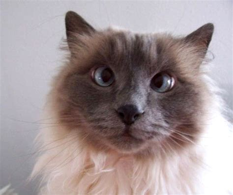 Cross Eyed Cats  Love Meow