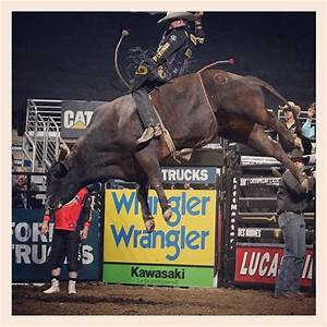17 Best images about PBR ! Love the bulls on Pinterest ...